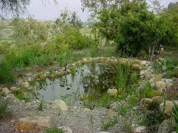 permaculture-pond